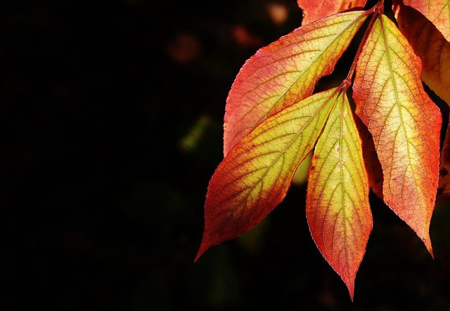 Leaves, Autumn, Colorful, Nature, Tree, Leaf