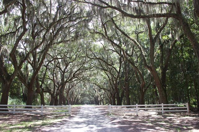 Avenue, Tree, Mood, Away, Tree Lined Avenue, Nature