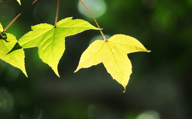 Leaf, Plant, Nature, Tree, Environment, Outdoor