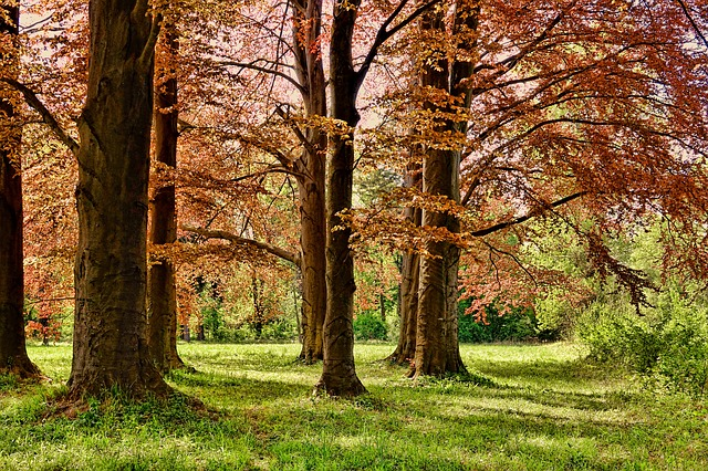 Tree, Spring, Park, Forest, Nature