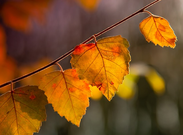 Leaf, Summer, Sunrise, Morning, Nature, Season, Tree