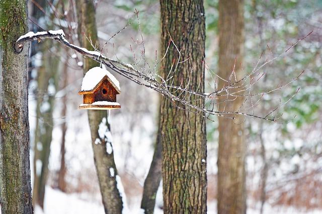Tree, Wood, Nature, Outdoors, Winter, Winter Wonderland