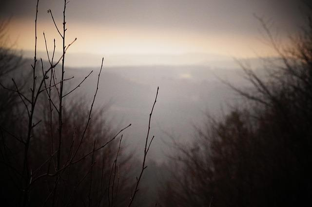 Winter, Fog, Landscape, Trees, Nature, View, Atmosphere