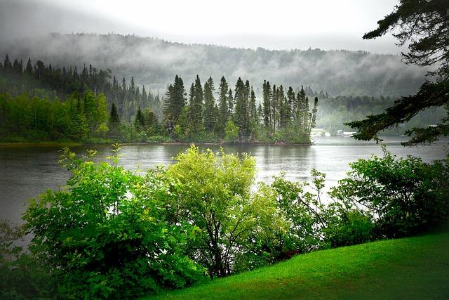 Landscape, Summer, Nature, Fog, Water, Lake, Trees