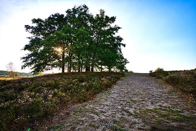 Lüneburg Heath, Trees, Landscapes, Nature, Heide