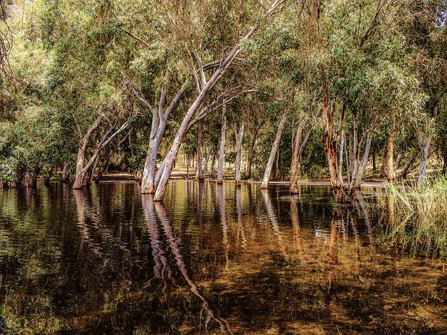Lake, Forest, Park, Trees, Reflections, Nature