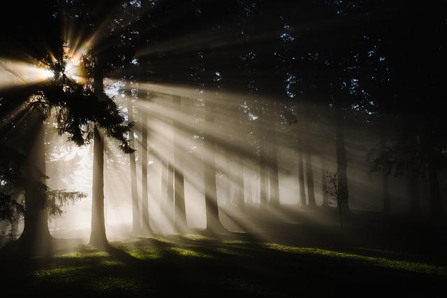 Forest, Nature, Sunbeams, Trees