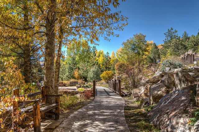 Vail, Colorado, Foliage, Nature, Usa, Travel, Forest