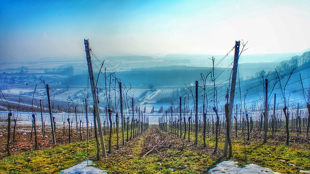 Landscape, Nature, Mountains, Vineyards, Panorama, Fog