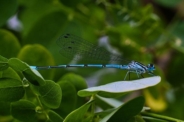 Dragonfly, Insect, Rainy Day, Rainy, Visitors, Nature