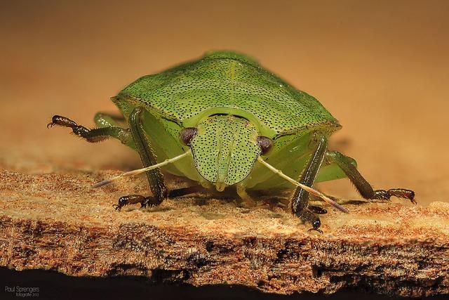 Bug, Wants, Nature, Macro
