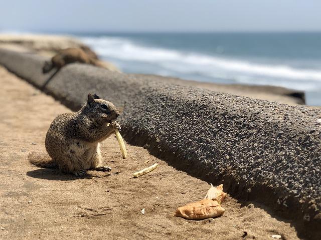 Nature, Beach, Sea, Water, Seashore, Fries, Squirrel