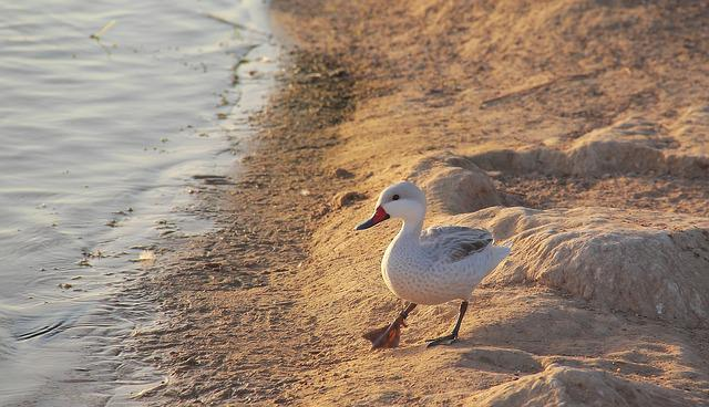 Bird, Nature, Water, Wildlife, Outdoors, Animal, Lake