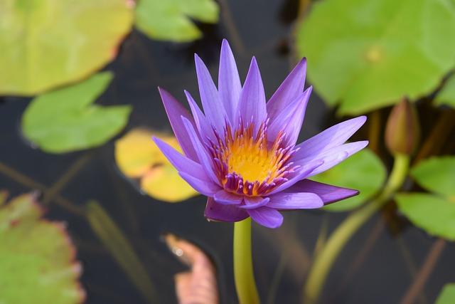 Flower, Flora, Park, Water Lilies, Flowers, Nature