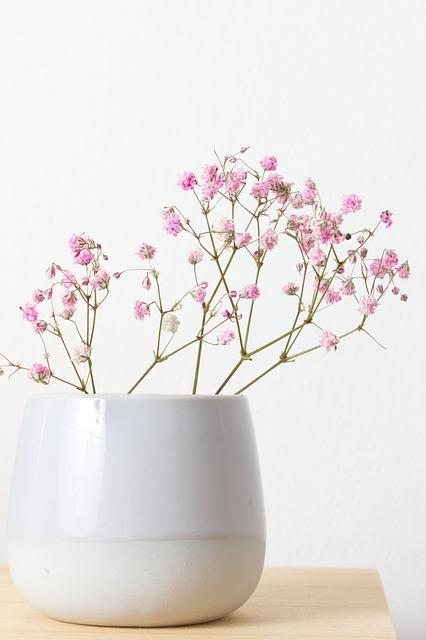 Gypsophila, Flower, Wedding, Wedding Day, Love, Nature