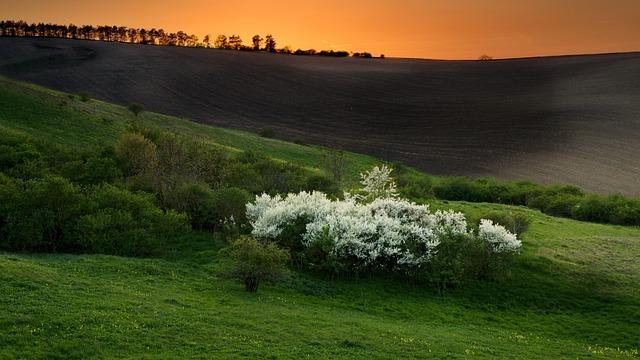Spring, Nature, Spring Landscape, West