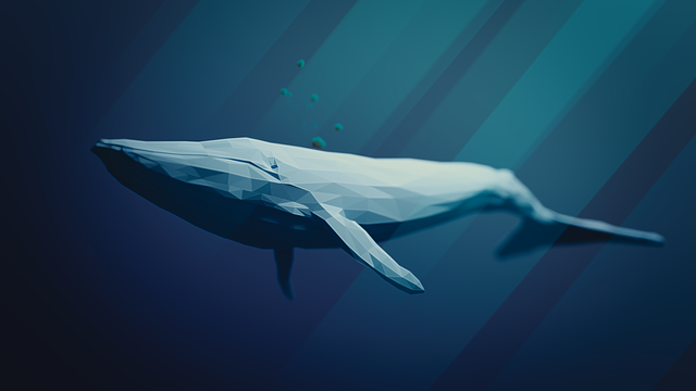 Blue Whale, Animal, Water, Nature, Whale, Sea