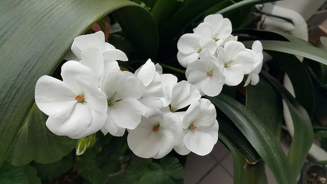 Flowers, White, Spring, Nature, Garden