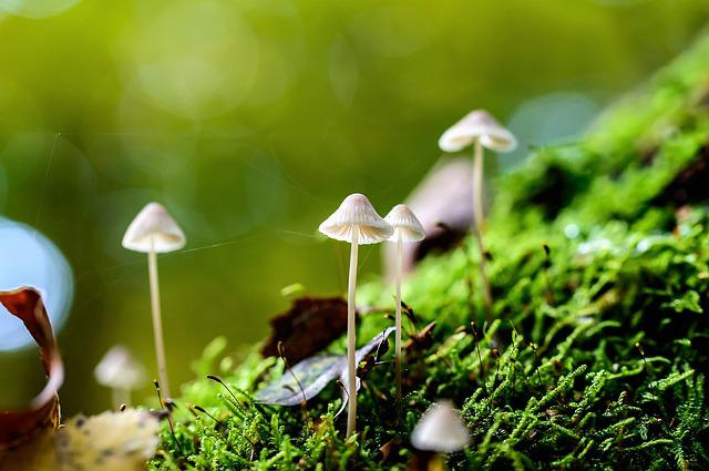 Mushrooms, Nature, White, Growth, Wet, In The Forest