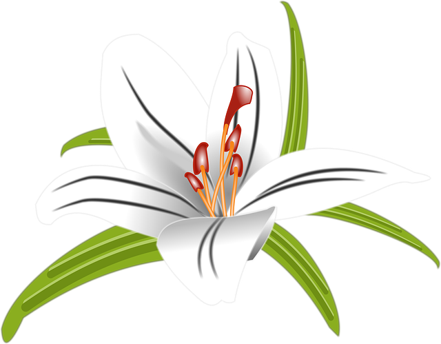 Lilly, Flower, Floral, Blossom, Nature, Bloom, White