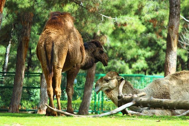 Nature, Animals, Mammals, Wild