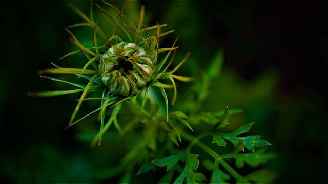 Wild Flower, Green, Nature, Dark, Black Background