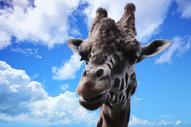 Giraffe, Animal, Wildlife, Nature, Wild, Mammal