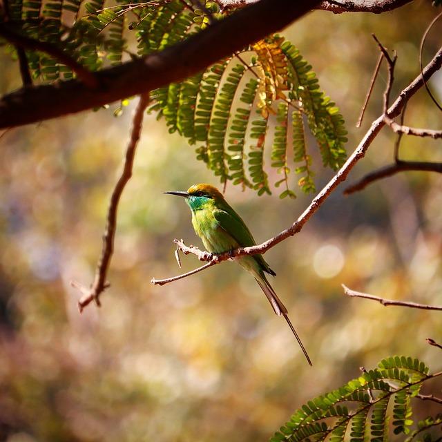 Bird, Wildlife, Nature, Animal, Wing
