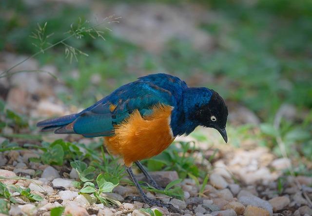 Bird, Wildlife, Nature, Animal, Feather