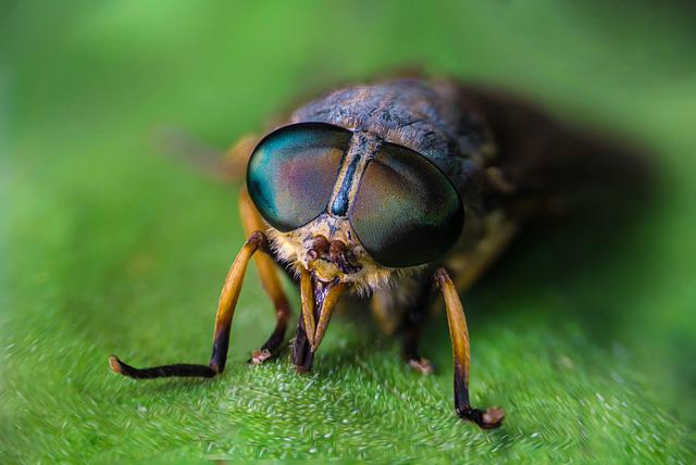 Insect, Animal, Wildlife, Fly, Nature, Biology, Wild