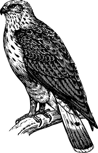 Bird, Eagle, Falcon, Feather, Nature, Symbol, Wildlife