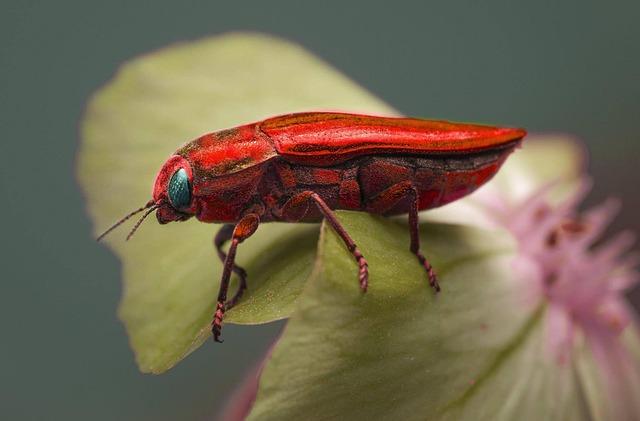 Insect, Nature, Invertebrate, Biology, Wildlife