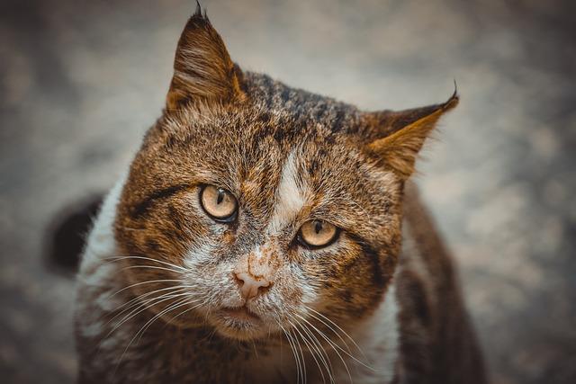 Mammals, Cat, Animals, Cute, Nature, Wildlife, Outdoor