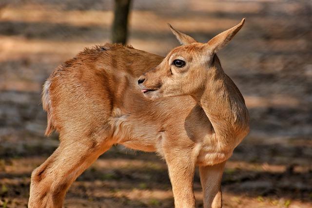 Mammal, Animal, Wildlife, Nature, Wild, Deer