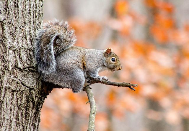 Nature, Wildlife, Tree, Wood, Squirrel