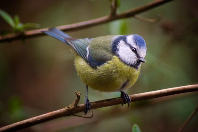 Animal World, Bird, Nature, Animal, Small, Wild, Wing