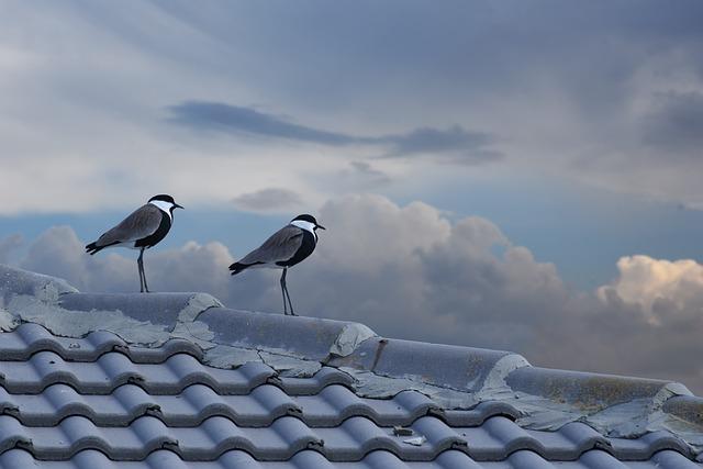 Bird, Nature, Outdoors, Winter, Sky, Cloud, Wing, Fly