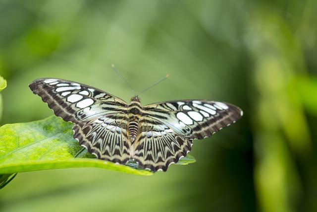 Butterfly, Green, Wings, Nature, Bug, Butterfly Garden