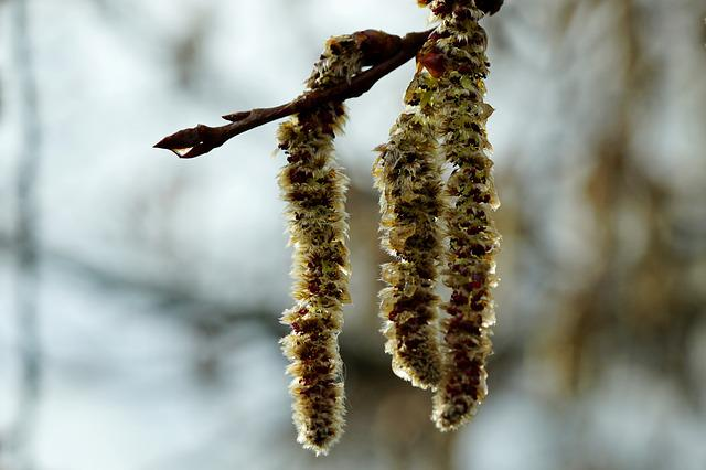 Tree, Winter, Nature, Flowers, Wood, Close Up