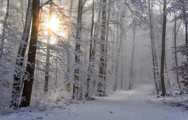 Snow, Winter, Forest, Nature, Cold, Snow Landscape