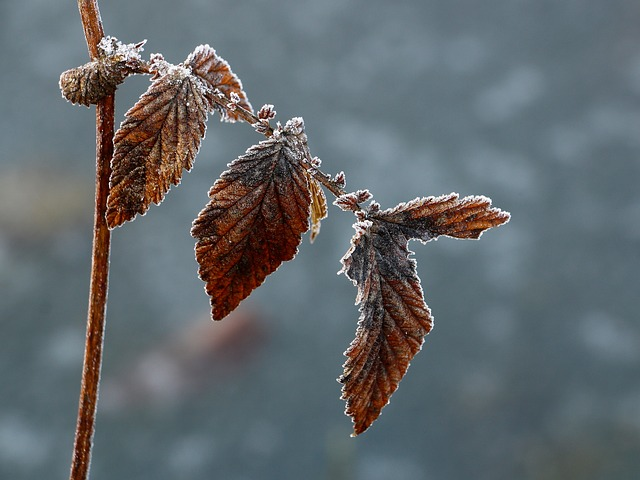 Nature, Winter, Frozen, Frost, Sheet, Abstract