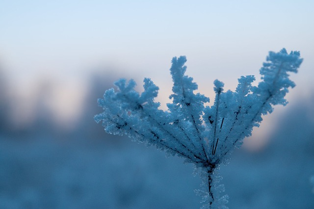 Winter, Macro, Nature, Frostbitten Twig, Icing, Snow