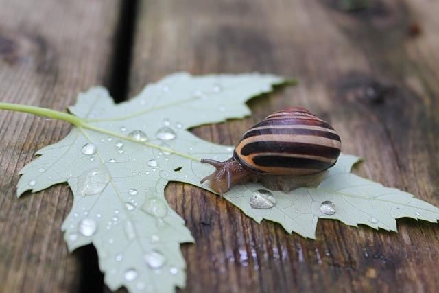 Nature, Leaf, Wood, Desktop, Closeup, Invertebrate