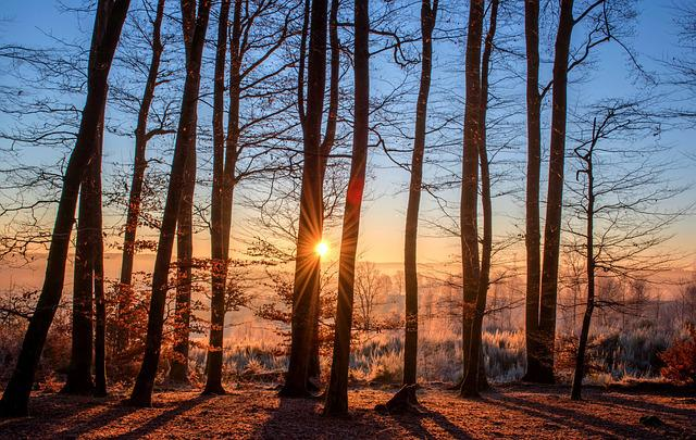 Forest, Landscape, Sun, Trees, Nature, Wood, Winter