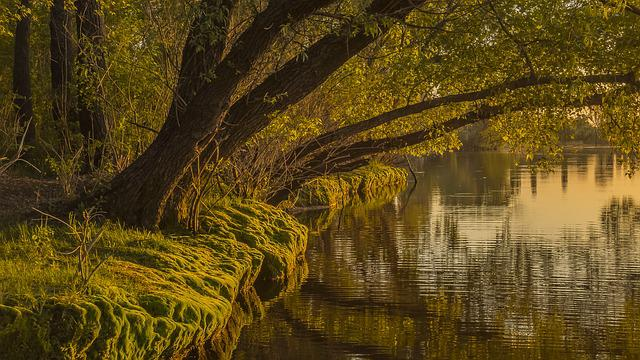 Nature, Water, Sheet, Tree, Wood, Plant, Landscape