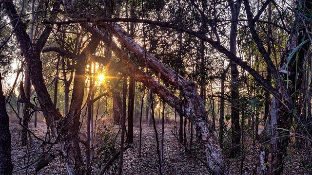 Woolland, Bushland, Nature, Wood, Tree, Landscape