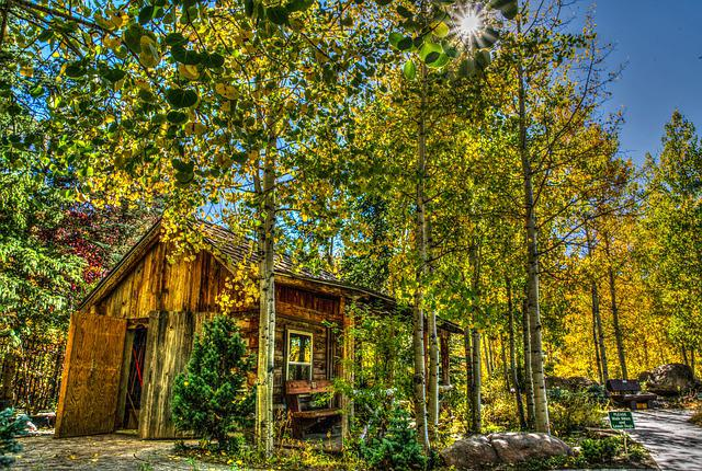 Log Cabin, Nature, Forest, Wooden, Foliage, Autumn