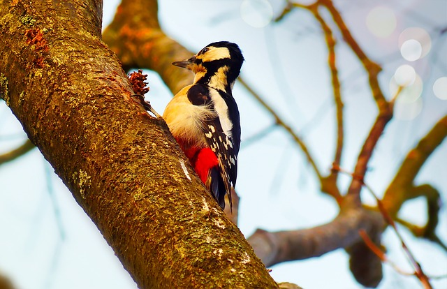 Woodpecker, Bird, Useful, Tree, Sky, Animals, Nature