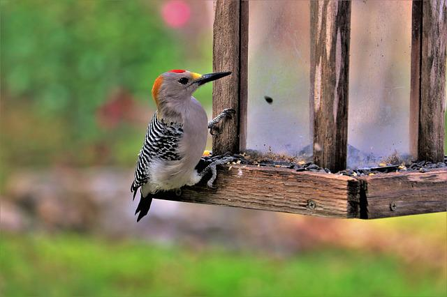 Woodpecker, Wildlife, Nature, Colorful, Perched