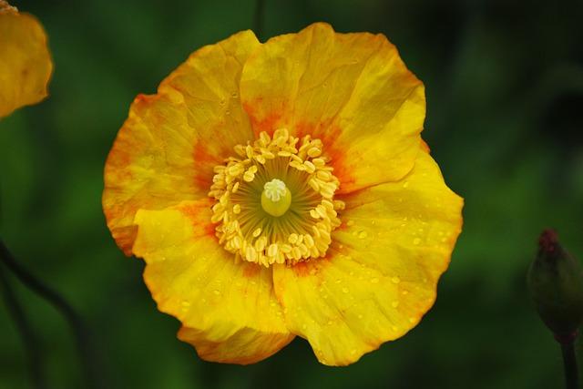 Flower, Pollen, Nature, Yellow, Spring, Garden, Plant
